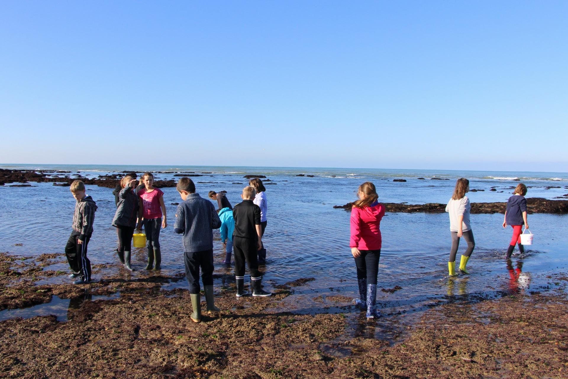 Classe découverte du milieu marin à l'Ile d'Oléron